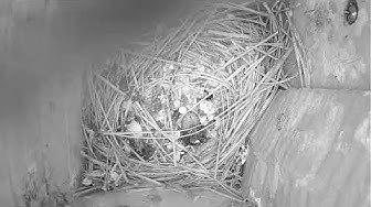 Bluebirds leave nest image